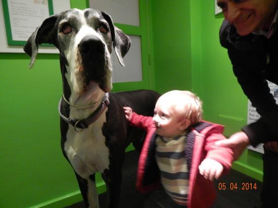 Sorrento Apartments: con los perros del dueno