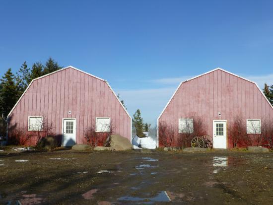 The Saskatoon Berry Farm: the red sheds!
