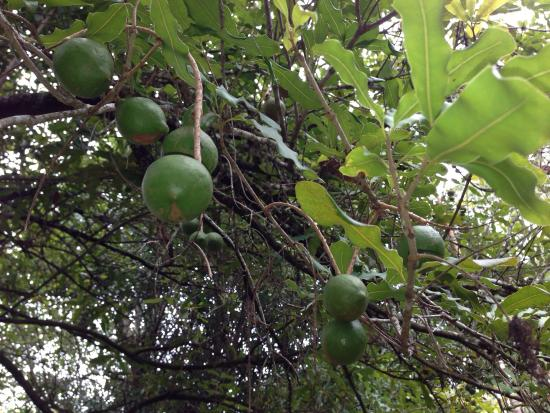 CrookNeck Retreat: Owner gave us fruits from their tree