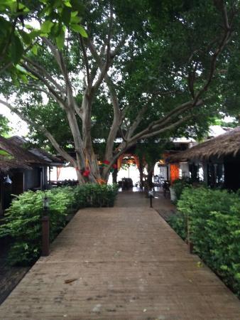 Tango Beach Resort: Pathway