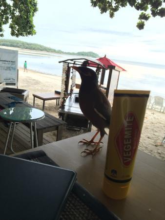 Tango Beach Resort: having breakky with a local