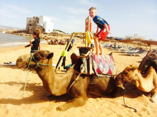 Surf & Chill Hostel : Camel ride