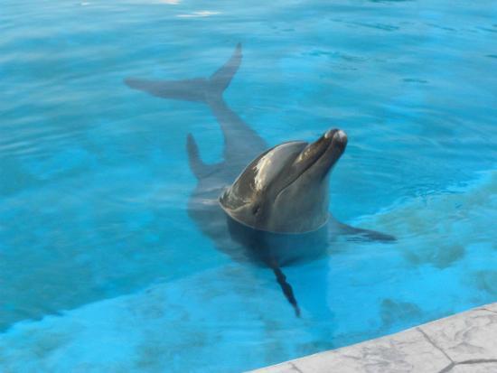 Barcelo Maya Tropical: Un des cinq dauphins