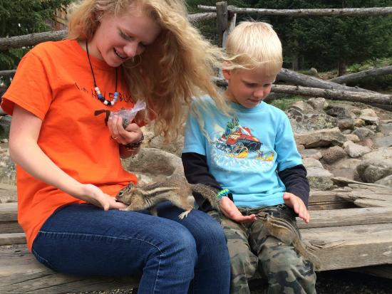 St. Elmo: Feeding the chipmunks