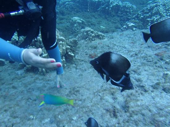 Buceo Isla de Pascua : la belleza submarina...