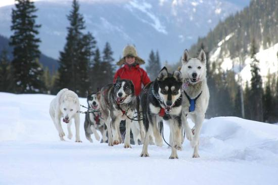 Cold Fire Creek Dogsledding