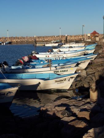 Loreto Bay National Marine Park: pangas @ the marina