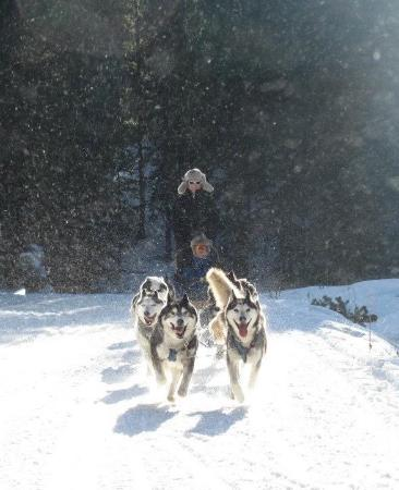 Good Times Adventures: A wonderful time being pulled by the dogs!