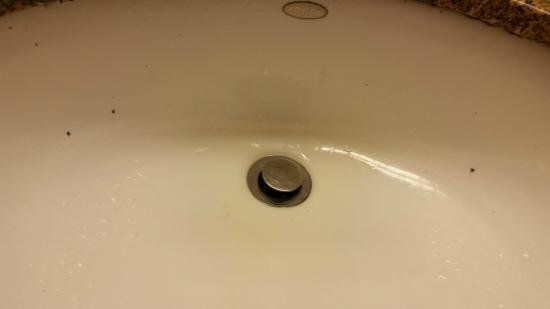 LivINN Hotel Minneapolis North / Fridley: Those black spots are mold falling from the rim of the sink