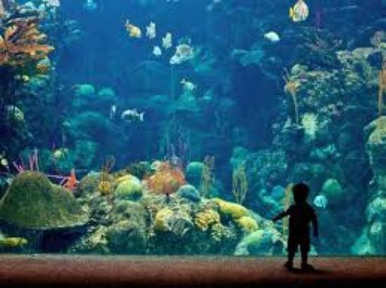 The Florida Aquarium : acuario en Tampa