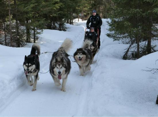Aventures Nord-Bec: Great time dogsledding!