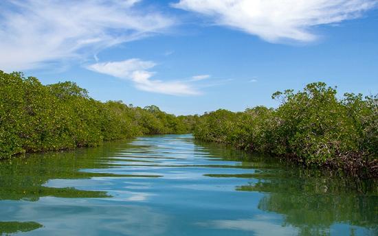 Paradise Island & The Mangroves (Cayo Arena): Mangroves
