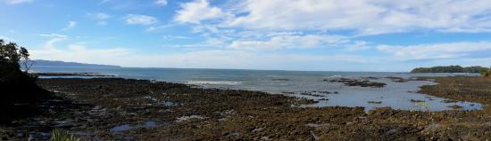 On The Reef: view from the garden, low tide