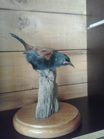Peregrine Wines: Another cool bird in private dining area
