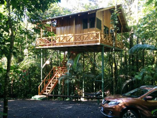 Our Hummingbird Treehouse Picture Of Tree Houses Hotel