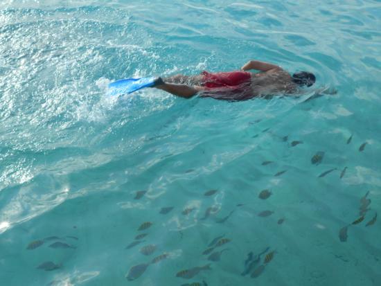 El Cozumeleno Beach Resort Snorkel Enfe Del Hotel