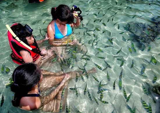 Provincia de Krabi, Tailandia: The fishes are friendly