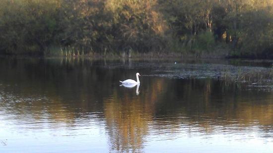 Oakhill Nature Reserve