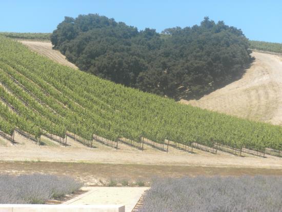 Niner Wine Estates: Niner  Winery