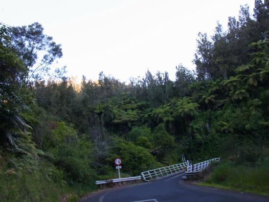 Mount Tutu Eco-Sanctuary : Ohauiti Road to the Eco Sanctuary