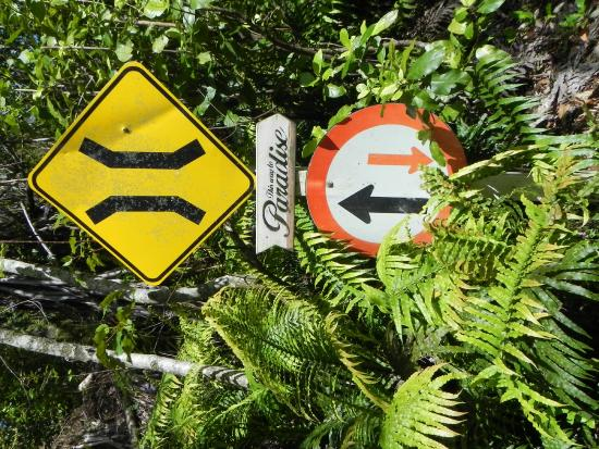 Mount Tutu Eco-Sanctuary : Small road to the Sanctuary
