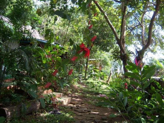 Antalaha, Madagascar: Les fleurs du paradis !