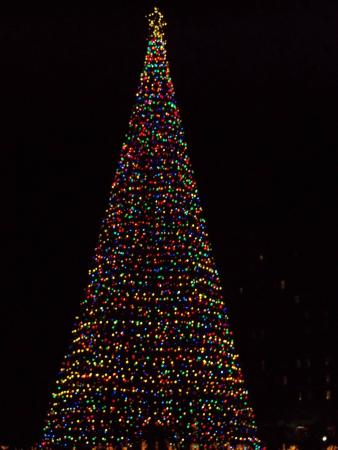 Marion Square : Christmas tree at night