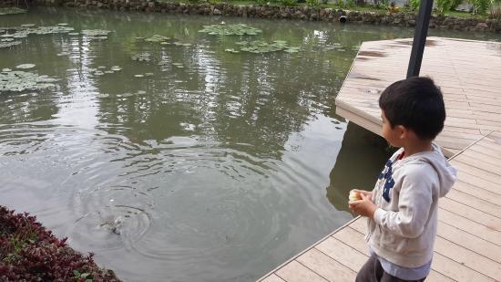 Los Mandarinos Boutique Spa & Hotel Restaurant: Alimentando peces en la terraza del Restaurante