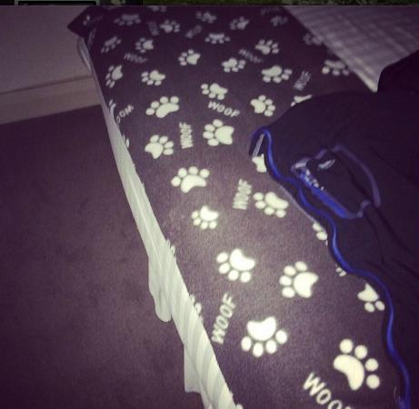 Gate Hotel: Everyone needs a dog blanket on the end of their hotel bed. I should have stuffed it in my ears!