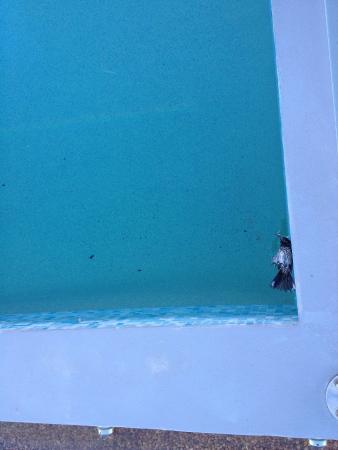 Injidup Spa Retreat : Dead bird in the plunge pool