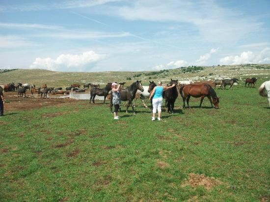 Lokva Rogoznica, Croatia: German tourists with wild horses
