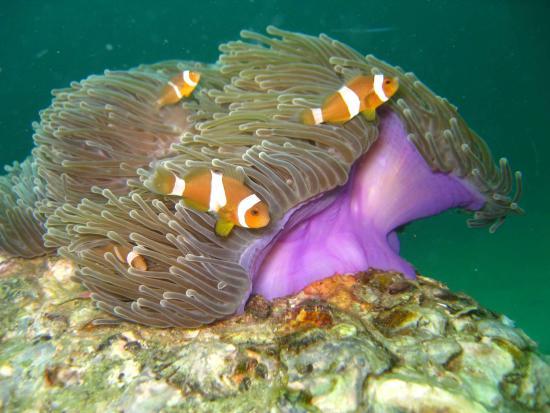 兰卡威水肺潜水中心