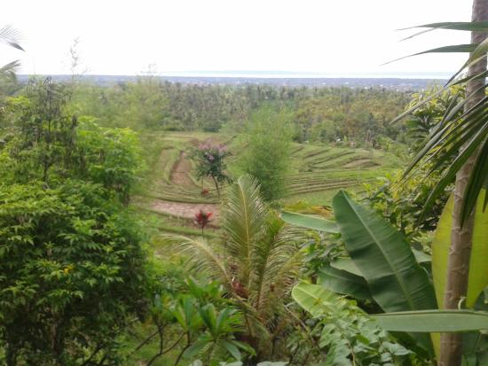 Rice Paddies Negara Java Island Picture Of West Bali Villas Umasari Resort Jembrana Tripadvisor