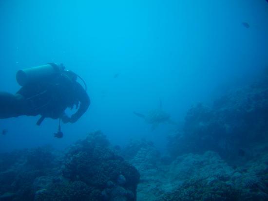 Bubbles Below : Onu mit Schildkröte