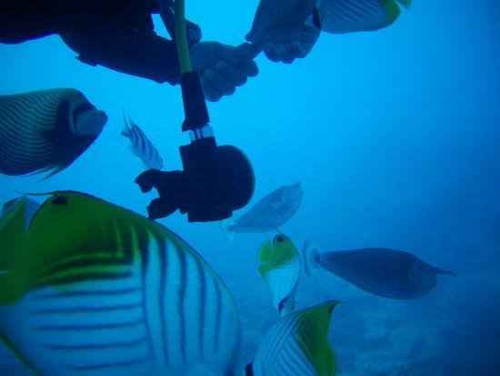 Bubbles Below : Onu wird von Fischen umlagert