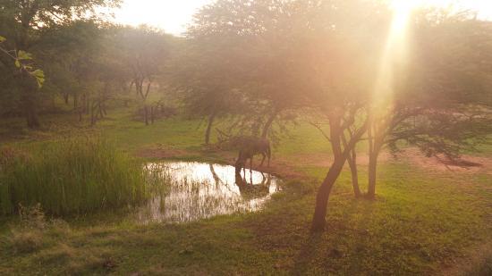 Thaba Khaya Lodge, Sable Ranch: the view!