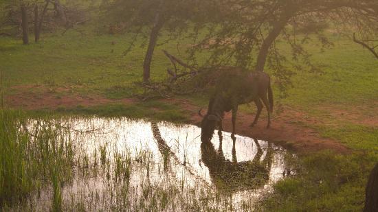 Thaba Khaya Lodge, Sable Ranch: amazing view of wildlife
