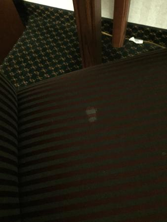 Embassy Suites by Hilton Detroit - Livonia/Novi: White stain on chair