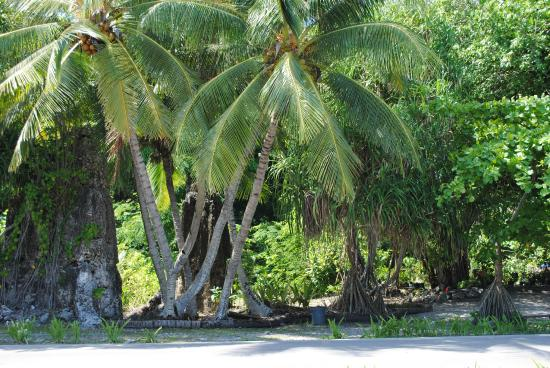 Nauru: verdant surroundings