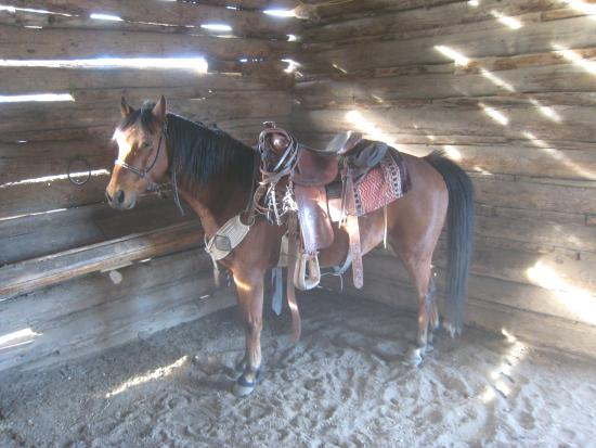 Lonesome Spur Ranch: Ready to go look for cows