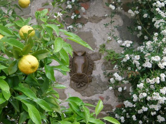 Agriturismo Centro Ippico della Berardenga: Dintorni