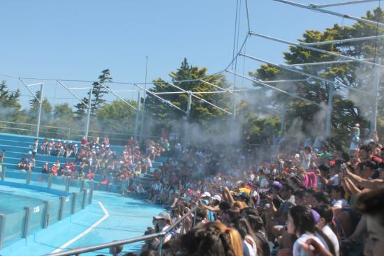 Mundo Marino: Con el calor, aspersores de agua que refrescan