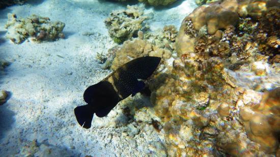 Le Taha'a Island Resort & Spa: Le jardin de corail