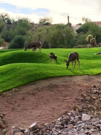 Gold Canyon Resort - Dinosaur Mountain Golf Course: Watch for Deer!