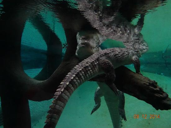 Wroclaw Zoo & Afrykarium: Crocodiles area