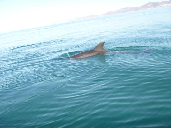 Sea & Adventures: These dolphins followed our boat