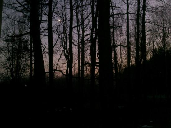 Image result for dusk forest