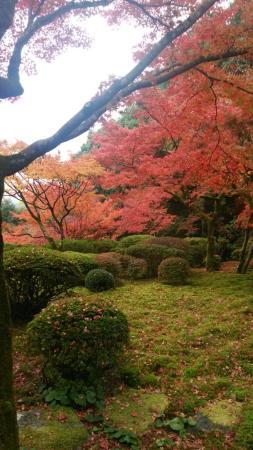Kunenan : 九年庵の庭園(秋)