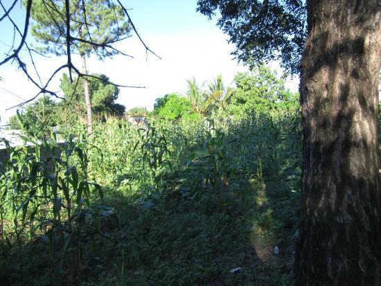 Casa De Las Anas: Conuco Garden