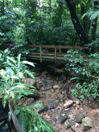 Carambola Botanical Gardens & Trails: Beautiful trails and bridges